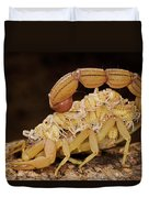 Scorpion Mother Carrying Her Brood Duvet Cover