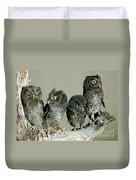 Screech Owl Chicks Duvet Cover
