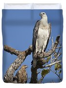 Sea Eagle And Brown Kite Sharing A Tree Duvet Cover