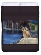 Sea Lion Resting Duvet Cover