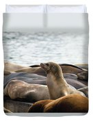 Sea Lions Sunning On Barge At Pier 39 San Francisco Duvet Cover