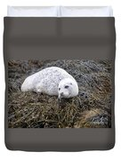 Seal Resting In Dunvegan Loch Duvet Cover
