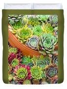 Sempervivum Or House Leeks Mixed  Duvet Cover