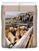 Sheeps Enclosure Duvet Cover