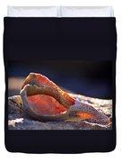 Shellwork Duvet Cover