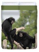 Siamang Monkeys Duvet Cover