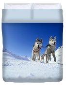 Siberian Husky Dogs Duvet Cover