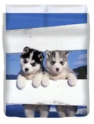 Siberian Husky Puppies Duvet Cover