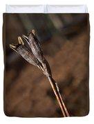 Siberian Iris Seed Pod 1 Duvet Cover