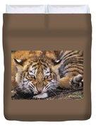 Siberian Tiger Cub Panthera Tigris Altaicia Wildlife Rescue Duvet Cover