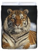 Siberian Tiger Portrait In Snow China Duvet Cover