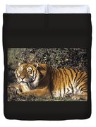 Siberian Tiger Stalking Endangered Species Wildlife Rescue Duvet Cover