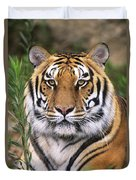 Siberian Tiger Staring Endangered Species Wildlife Rescue Duvet Cover