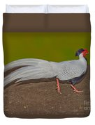 Silver Pheasant In Strutting Pose Duvet Cover