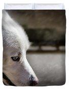 Sled Dog Duvet Cover