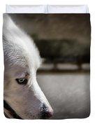Sled Dog Duvet Cover by Bob Orsillo