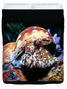 Snails 1 Duvet Cover