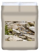 Snow Bunting Pictures 43 Duvet Cover