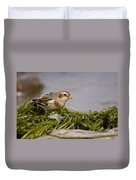Snow Bunting Pictures 87 Duvet Cover