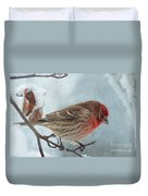 Snow Day Housefinch With Texture Duvet Cover