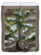 Snow On Baby Pine Tree In Yellowstone Duvet Cover