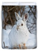 Snowshoe Hare Pictures 130 Duvet Cover