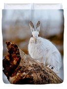 Snowshoe Hare Pictures 131 Duvet Cover