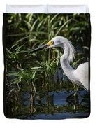 Snowy Egret Stalking Duvet Cover