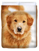 Snowy Golden Retriever Duvet Cover by Christina Rollo
