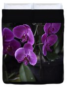 Some Very Beautiful Purple Colored Orchid Flowers Inside The Jurong Bird Park Duvet Cover
