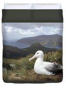 Southern Royal Albatross On Nest Duvet Cover