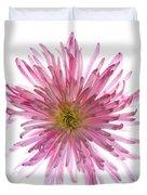 Spider Mum Flower Against White Duvet Cover