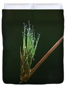 Spiritualism In Nature... Duvet Cover