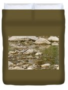 Spotted Sandpiper Pictures 36 Duvet Cover