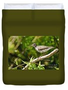 Spotted Sandpiper Pictures 48 Duvet Cover