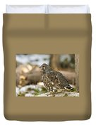 Spruce Grouse In The Snow Duvet Cover