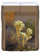 Staghorn Cholla Cactus Catching Sunlight In Joshua Tree Np-ca Duvet Cover