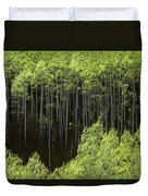 Stand Of Birch Trees New Growth Spring Rich Green Leaves Duvet Cover