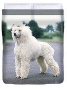 Standard Poodle Dog, Unclipped Duvet Cover
