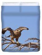 Steppe Eagle Aquila Nipalensis 1 Duvet Cover