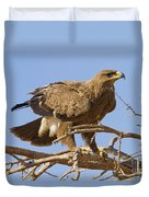 Steppe Eagle Aquila Nipalensis 2 Duvet Cover