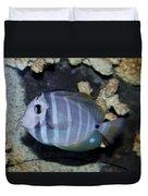 Striped Fish Duvet Cover