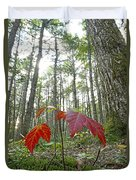 Sugar Maple In Old-growth Canadian Duvet Cover