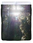 Sun Penetrates The Redwood Forest Duvet Cover