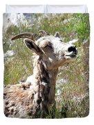 Sunbathing Mountain Sheep Duvet Cover