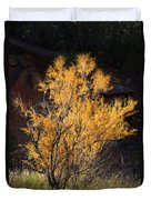 Sunlit Tree In Palo Duro Canyon 110213.06 Duvet Cover