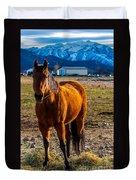 Sunset Bay Horse Heber Valley Utah Duvet Cover