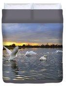 Swans At Sunset Duvet Cover