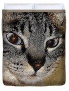 Cat - Sweet - Boy Duvet Cover