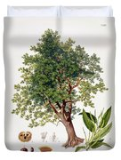 Sweet Chestnut Duvet Cover by Johann Kautsky